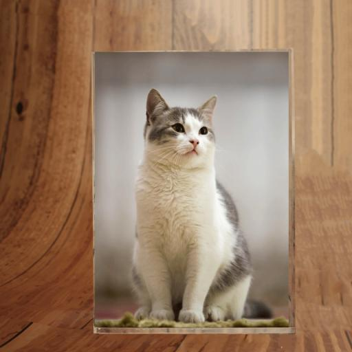 Pets Photoblock Portrait