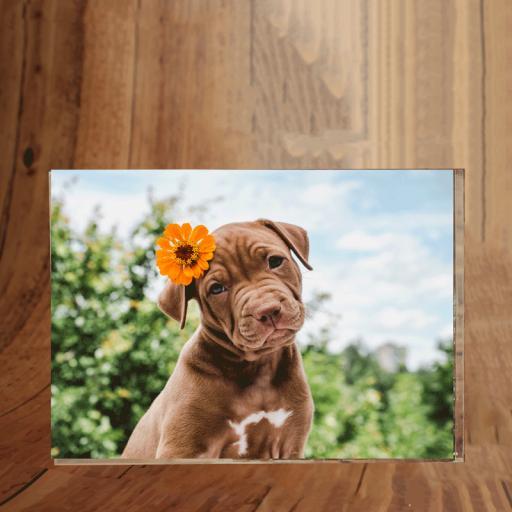 Pets Photoblock Landscape